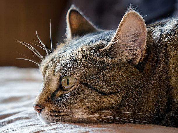 Katze Erbricht Nassfutter