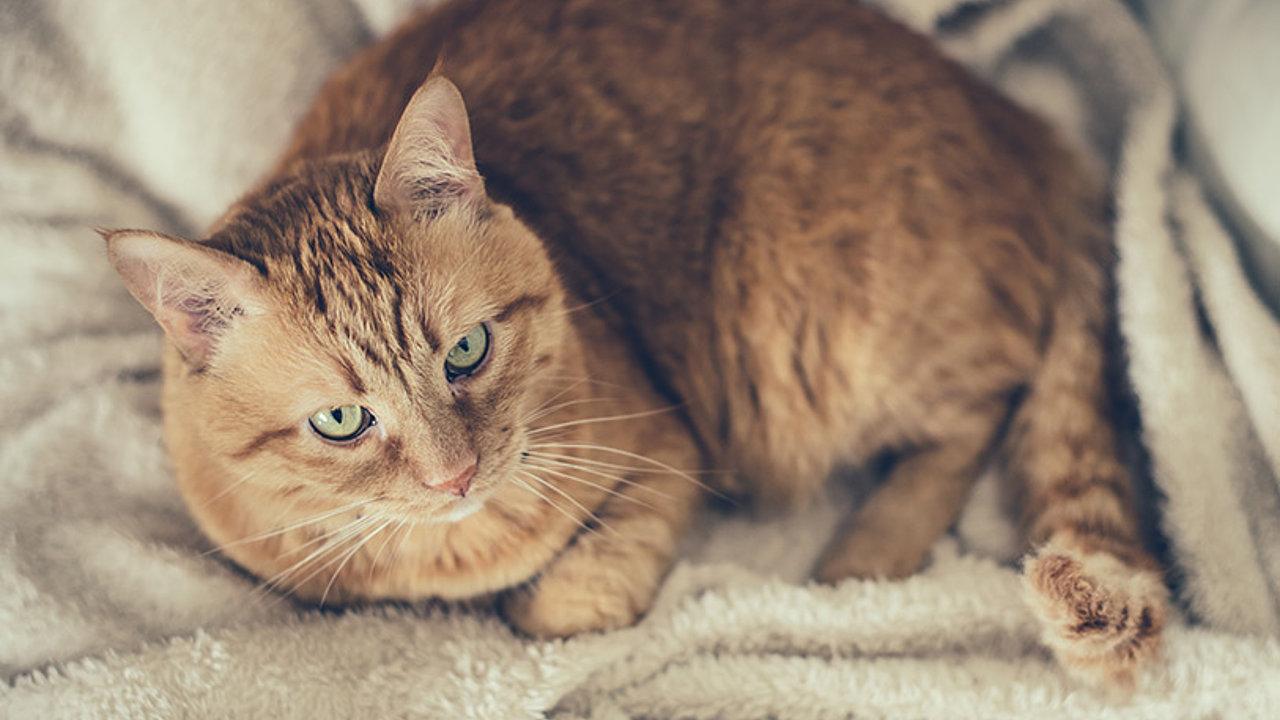 Katzenurin entfernen – Tipps und Tricks