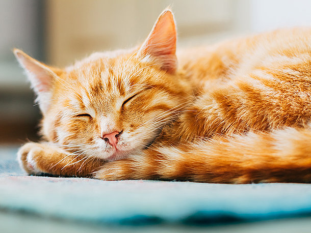 Katze Chippen Die Haufigsten Fragen