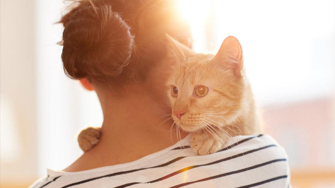 Katze Corona