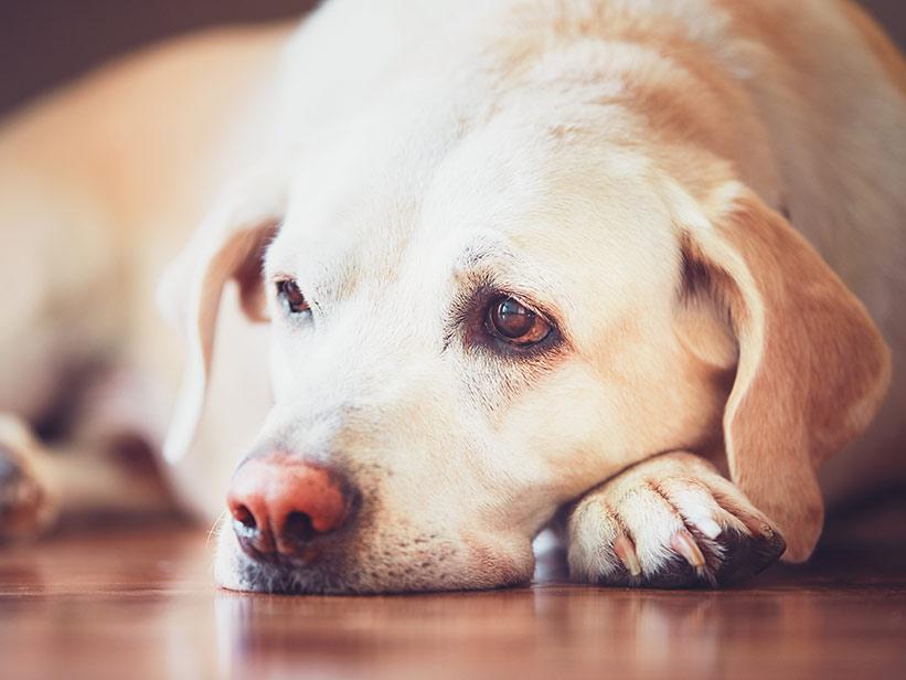 abführmittel hund