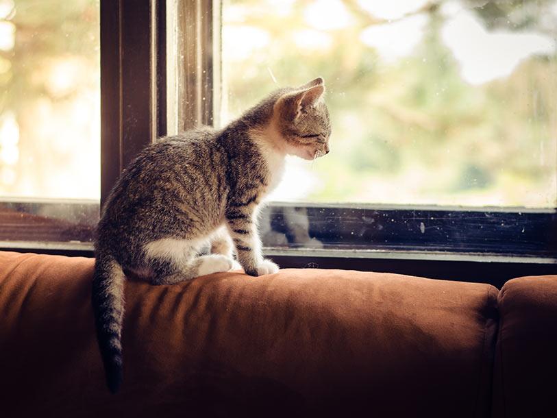 Katzen-Dating-Seite Regeln des Engagements online dating