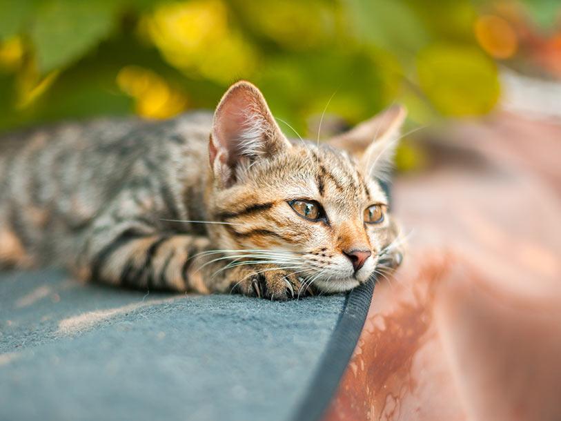 Katze Erbricht Ursache Und Maßnahmen Mera